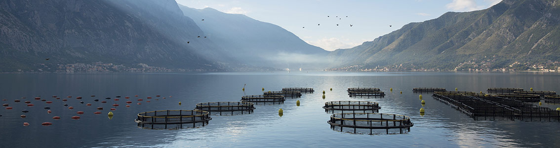 Fish farms in a fjord